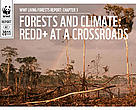 Living Forests Report