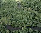 Abrigo de imensa biodiversidade, florestas brasileiras merecem legislação moderna