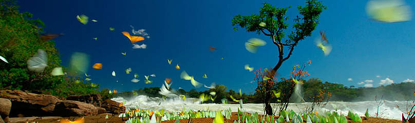 / ©: WWF-Brasil/Zig Koch