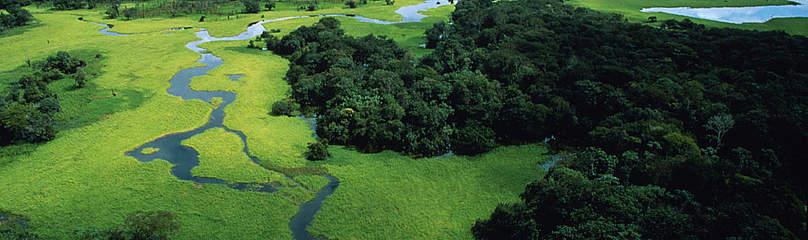 Dia da Amazônia | WWF Brasil
