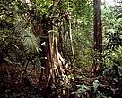 Floresta amazônica, Amazônia, Brasil.