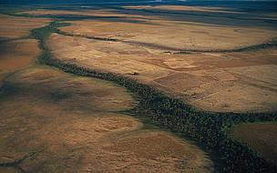 Vegetação queimada durante seca severa e queimadas, na Floresta Amazônica, em Roraima.