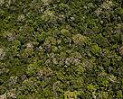 Parceria com governo do Estado e Sky ajuda a manter a floresta em pé e evitar o desmatamento da Amazônia