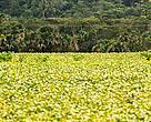 Um dos maiores desafios para a sobrevivência da agricultura brasileira é equilibrar, de forma concreta, produção e conservação.