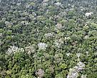 No Bioma Amazônia, a reserva legal corresponde a 80% da propriedade.