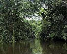Quase 3 milhões de hectares de floresta podem ficar sem proteção.