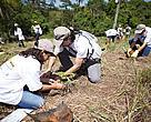 Cerca de 200 pessoas participaram de ação voluntária de recuperação do Pipiripau