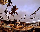 Fragata-comuns e pelicanos marrons voam em Puerto Ayora, Santa Cruz Island, Galapagos, no Equador.