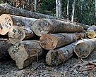 Toras de madeira na fazenda São Jorge, Acre, Brasil.