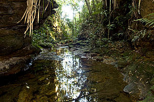 Ecological Station Juréia-Itatins, visited during a Field Trip in the Atlantic Rainforest, 8-24 ...  	© WWF-Brazil / Adriano Gambarini