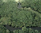 Vista aérea de floresta inundada durante a estação chuvosa entre o Rio Amazonas e o Rio Negro, no Amazonas.