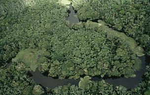 Vista aérea de floresta alagada entre o Rio Amazonas e o Rio Negro no Amazonas, durante o período chuvoso.