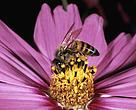Frente ao declínio da espécie em diversos países devido ao amplo uso de inseticidas, pouco temos para comemorar neste dia