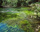 Os proprietários de terra que decidem aderir ao Pagamento por Serviços Ambientais (PSA) são remunerados por atuar em prol da conservação e da preservação dos recursos hídricos.