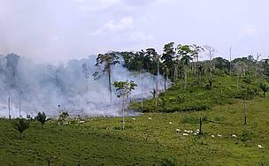 Desmatamento na Amazônia associado à pecuária