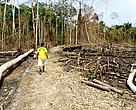 Estudos apontam que, com as mudanças no Código Florestal, o desmatamento aumentaria no país.