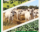 Agribusiness Receivables Certificates – Green CRAs. Encouraging more responsible practices in commodity production in Brazil