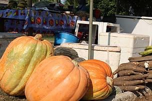 As abóboras do seu Cézar, que chegavam a pesar 37 quilos, fizeram sucesso na feira realizada no Apuí