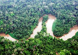 forest based economy in the amazon increases family in e