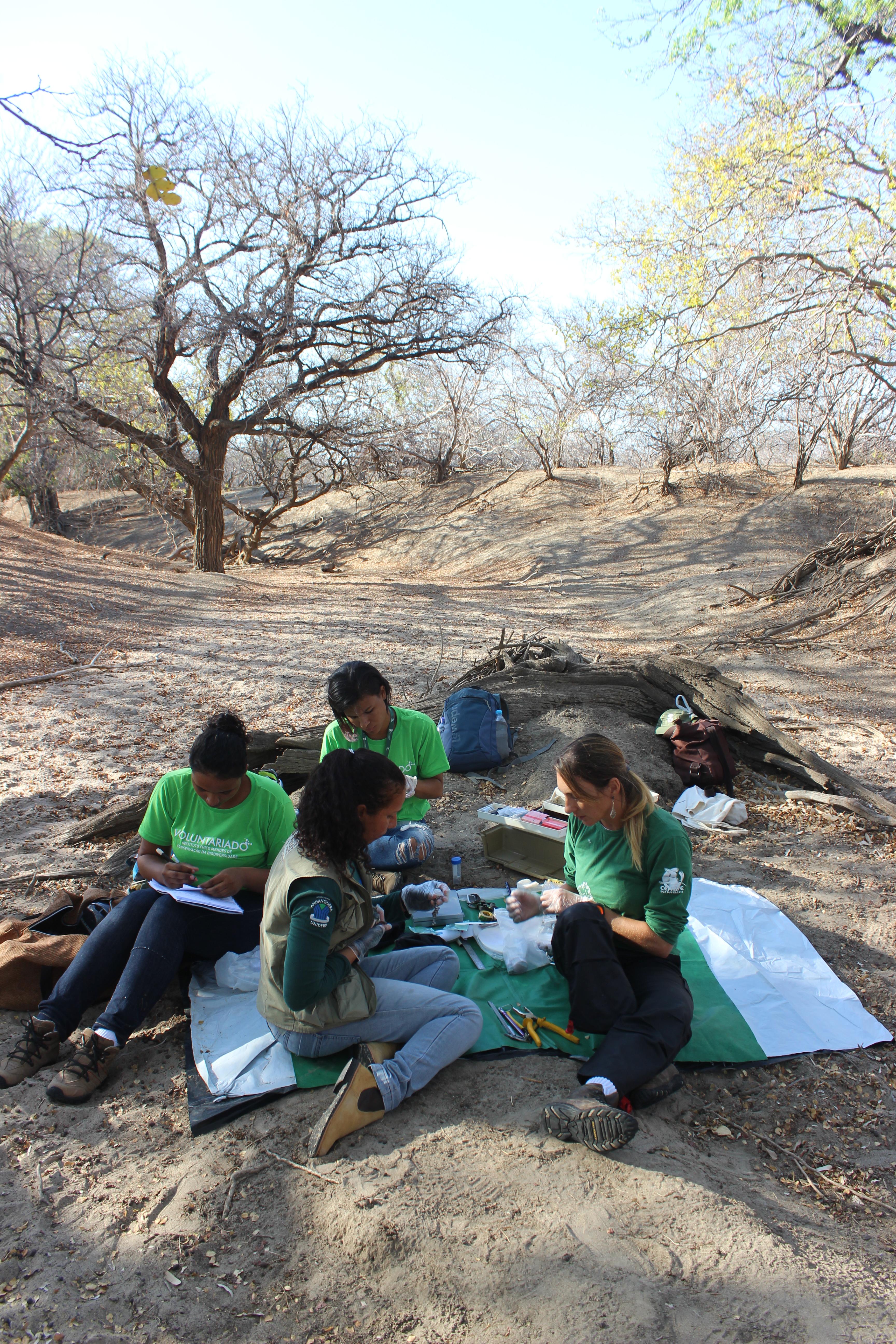 Suficiente Na Caatinga, jovens voluntários preparam a volta da ararinha-azul  HD76