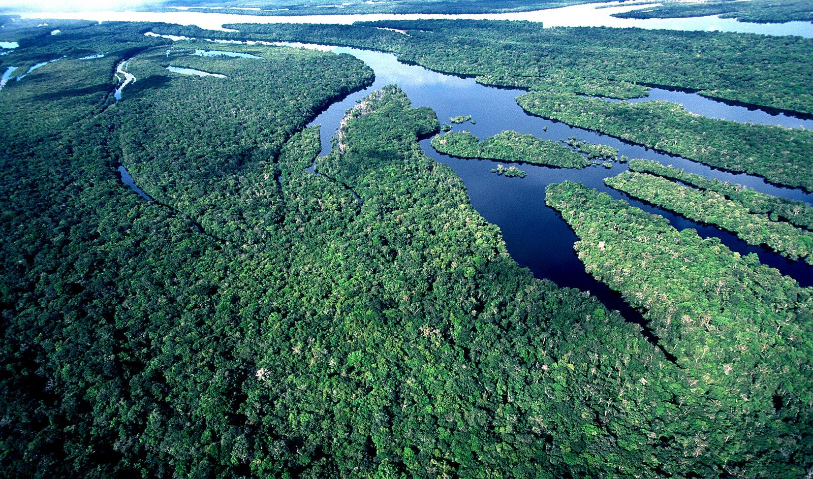 Resultado de imagem para Amazônia exuberante