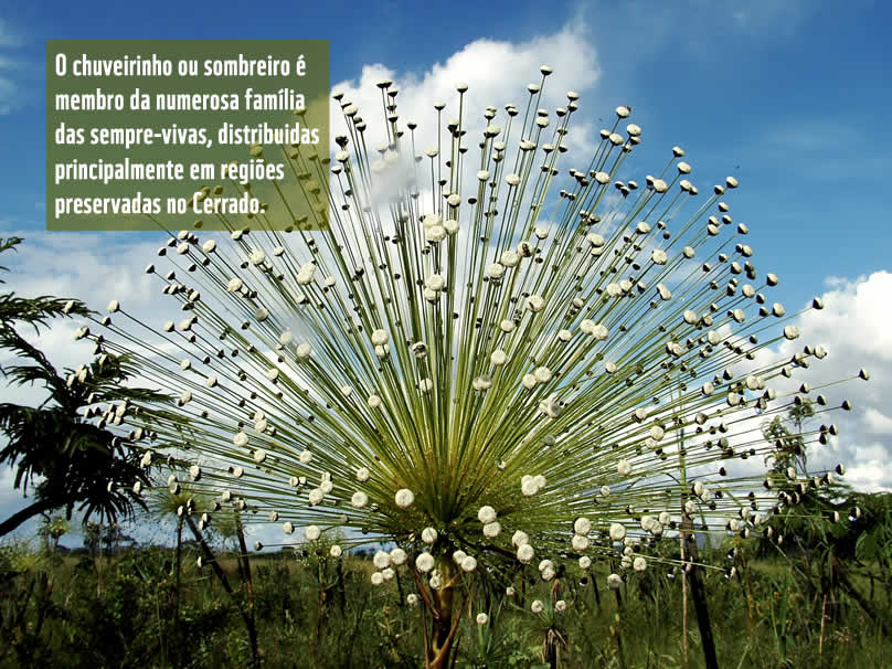 Chuveirinho | WWF Brasil