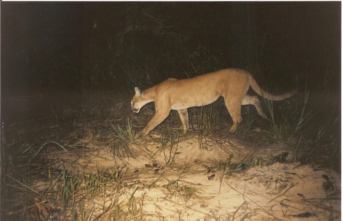 Excepcional Onde estão os animais do Cerrado? | WWF Brasil PQ96